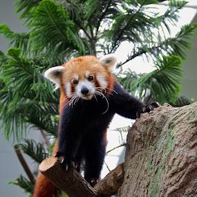 by Alex Chia - Animals Other Mammals
