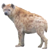 Hyena Sticker