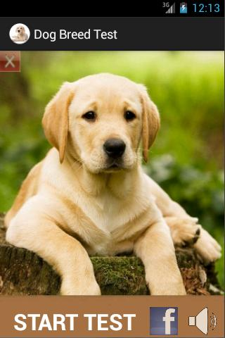 Which Dog Breed fits your Home