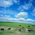 Summer  grassland logo