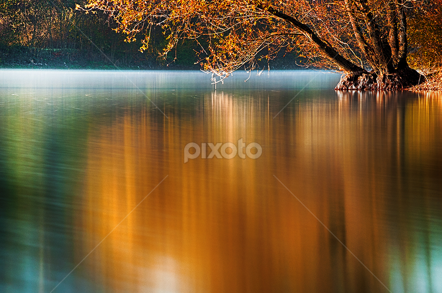 Autumn willow by MIhail Syarov - Landscapes Waterscapes ( orange flower, reflection, autumn, foliage, lake, willow, river, blue, orange. color,  )