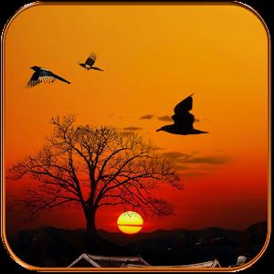 sunset-live-wallpaper