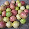 Passiflora / Passionfruit