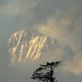 by Nisha B. - Landscapes Mountains & Hills ( mountain, dzongri, west sikkim,  )
