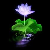 3D Lotus 8