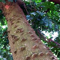 Plantas e Árvores do Brasil