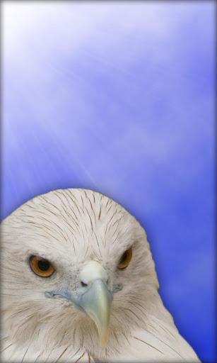 老鹰 動態桌布