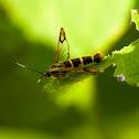 Apple bark borer moth