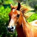 Horses! logo