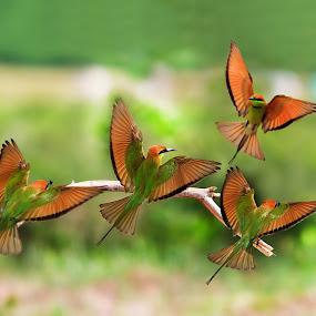 Dancing class by Thảo Nguyễn Đắc - Animals Birds