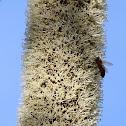 Grass tree flower