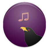 Koyal Bird Ringtone