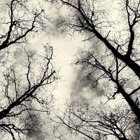 by Micky Mihalache - Black & White Landscapes ( clouds, black and white, trees, forest, woods )