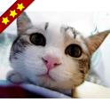 人気の猫アプリまとめ icon