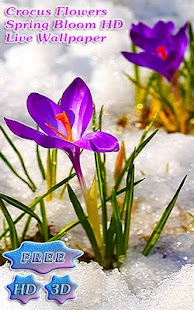 Blossom Flower Crocus Buds- screenshot thumbnail