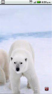 Save the Arctic!! LWP FREE - screenshot thumbnail