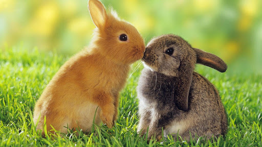 ウサギの壁紙