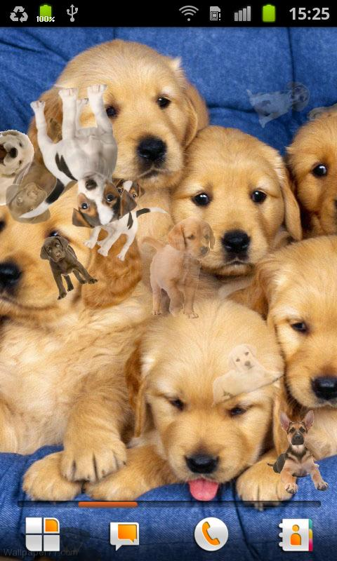 Puppy Live Wallpaper - screenshot