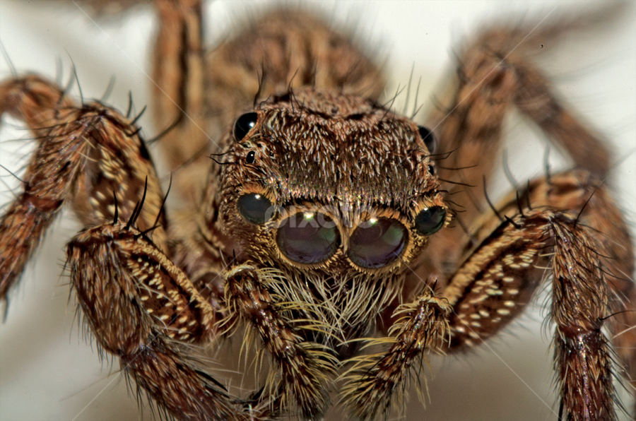 Horrible by Eko Janu - Animals Insects & Spiders