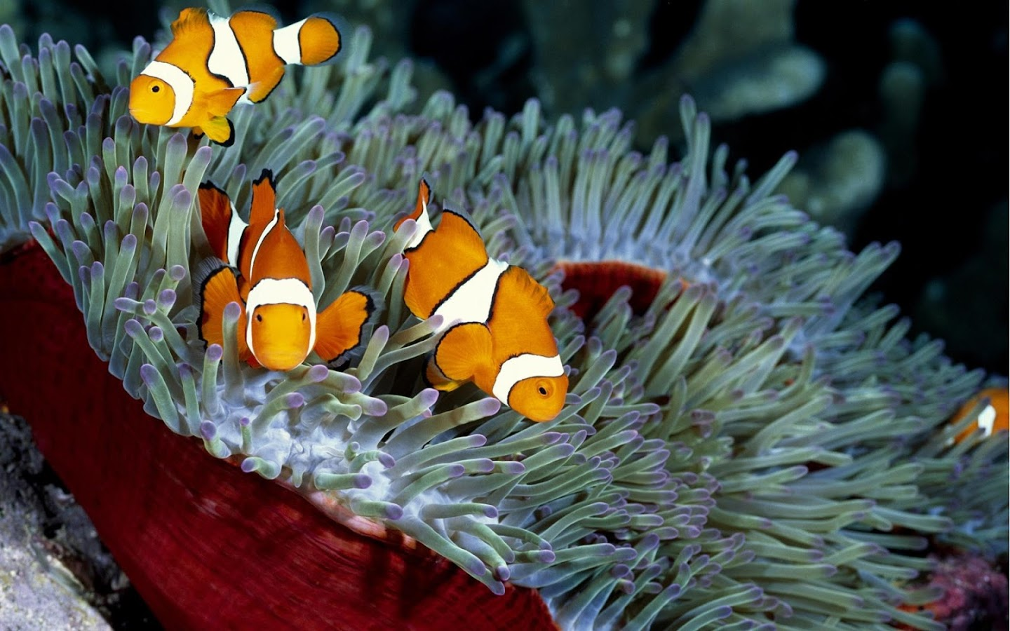 sea animals wallpapers android apps on google play
