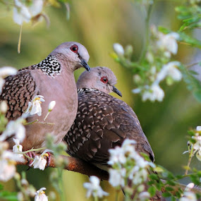 Love in Bloom by Pritha Gupta - Animals Birds ( animals, nature, nature up close, birds, couples,  )