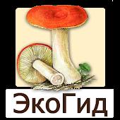 EcoGuide: Russian Fungi