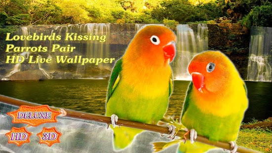 Lovebirds Kissing Parrots Pair- screenshot thumbnail