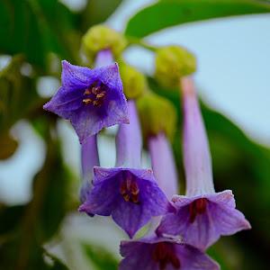 Flower0028.jpg