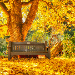 The falling leaves .... by Tin Tin Abad - City,  Street & Park  City Parks ( facebook,  )