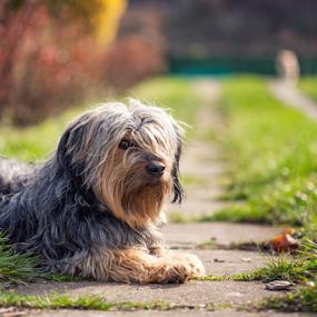 Ari by Dejan Stanic - Animals - Dogs Portraits (  )