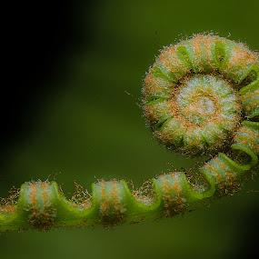 Fern II by Jali Razali - Nature Up Close Leaves & Grasses (  )