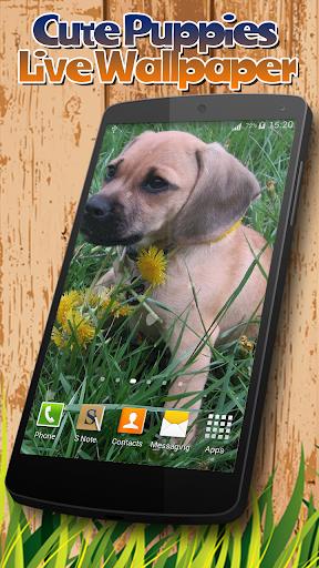 玩免費個人化APP 下載可愛的小狗動態壁紙 app不用錢 硬是要APP