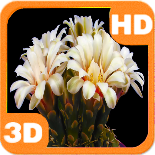 Blooming Flower Cactus Buds 個人化 LOGO-阿達玩APP