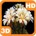Blooming Flower Cactus Buds icon
