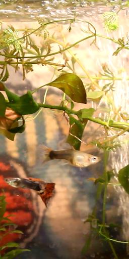 Life Aquarium Online
