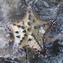 chocolate chip star