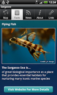 Conserving the Sargasso Sea- screenshot thumbnail