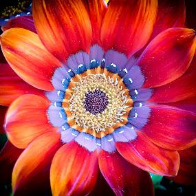 red flower by Zeljko Jelavic - Novices Only Flowers & Plants (  )