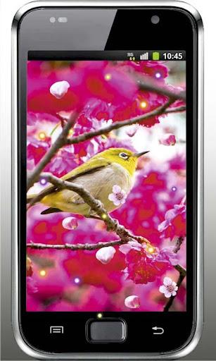 Sakura Flowers live wallpaper