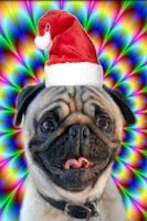 Screenshot of Christmas talking dog