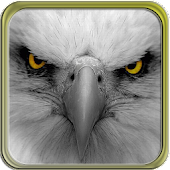 Puzzi puzzles eagles in HD