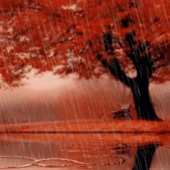 Autumn Scenary Rain Live Wallp