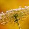 Nature's Frills-Pixlr Karen-ip-lc.jpg