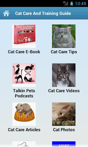 Cat Care And Training Guide