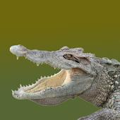 Crocbite FREE