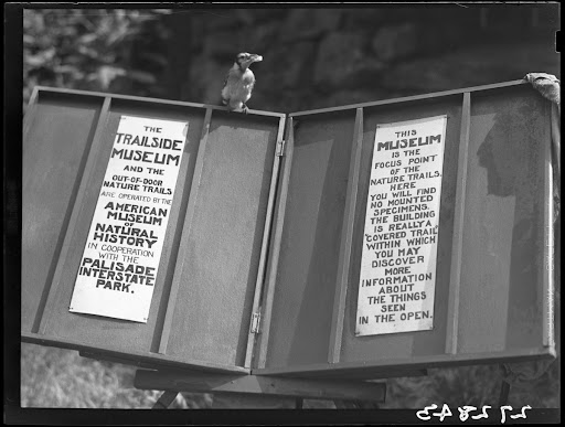 Blue jay perched on sign, Trailside Museum, Bear Mountain State Park, New York, 1930