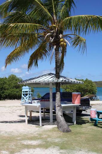 Antigua-palm-tree - A palm tree has its way in Antigua.