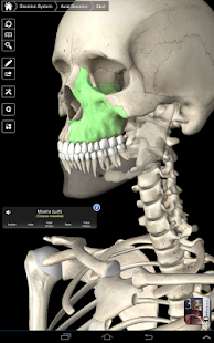 Essential Skeleton 3 screenshot for Android