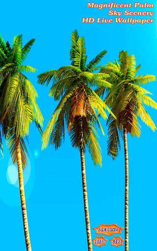 Magnificent Palm Sky Scenery