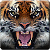 Tiger Live Wallpaper